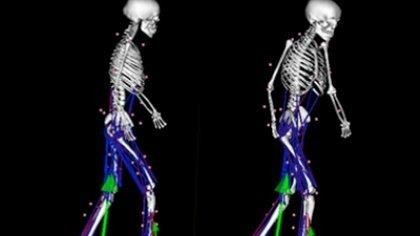 x-ray vision of skeleton walking - computer model